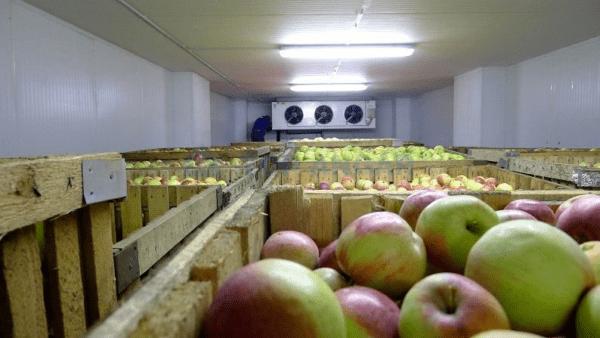 Качественное фруктохранилище