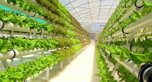 Гидропоника как эффективный метод выращивания растений