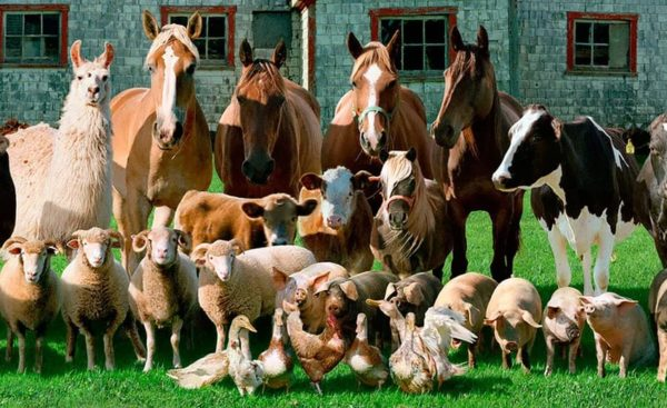 Виды оборудования для животноводства