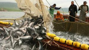 С завтрашнего дня украинцы могут массово идти на рыбалку