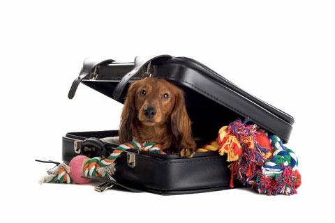путешествие с домашними животными