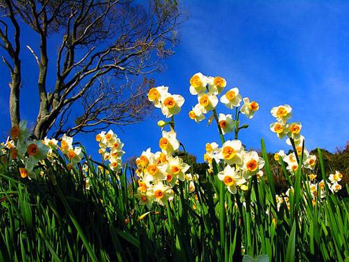 Буковель весной