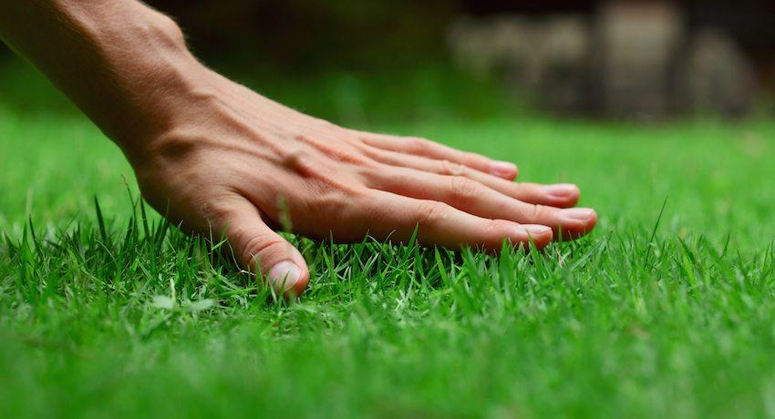Газонная трава для благоустройства территорий