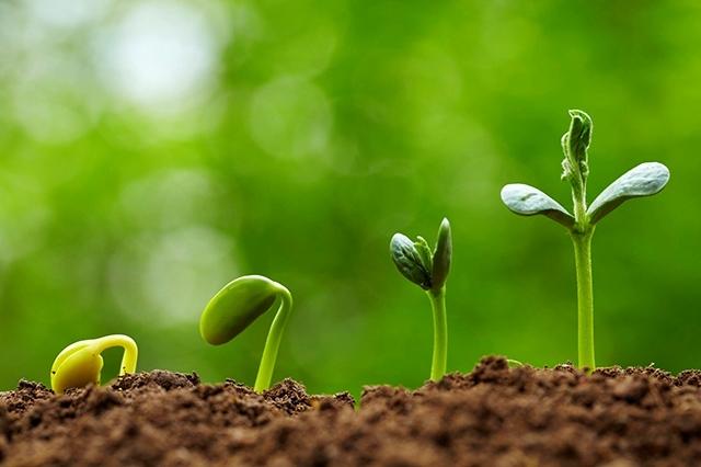 Природные регуляторы роста растений: виды, анализ результатов использования