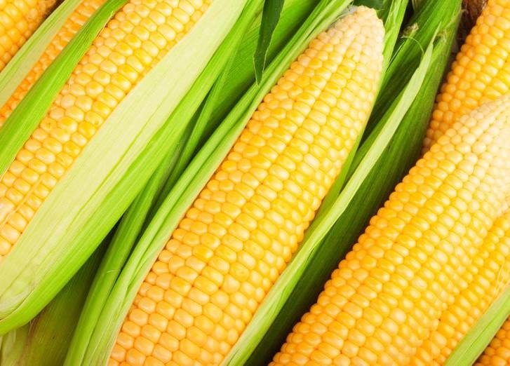 Как выбрать семена кукурузы?