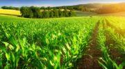 От чего и чем нужно защищать растения?